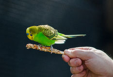 Bird on a stick Stock Images