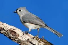Bird On A Stick Royalty Free Stock Image