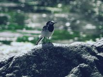Bird. On stone Stock Photos