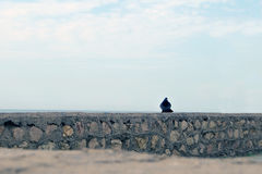 A bird on a stone fence, beyond which the sea and sky. The concept of loneliness Stock Images