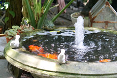 Bird stone sculpture on the little pond edge. Bird stone sculpture on the little goldfish pond edge with water fountain Royalty Free Stock Photography