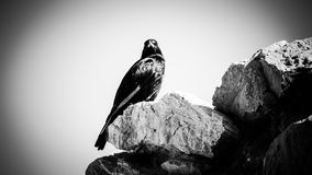 Bird on stones. In Israel black and white Stock Photos