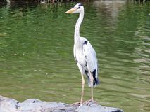 Bird, Stork, Fauna, Crane Like Bird Stock Photography