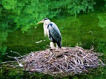 Bird, stork, heron, nature, animal, white, nest, birds, wildlife, water, egret, beak, wild, storks, feather, green, feathers, fami. Ly, pond, blue, lake, sky Stock Image
