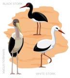Bird Stork Set Cartoon  Stock Photos