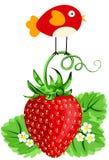 Bird on Strawberry Stock Photos