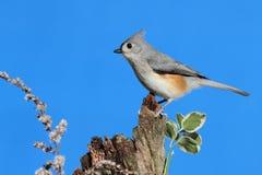 Bird On A Stump Stock Photos