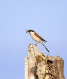 Bird on the stump Royalty Free Stock Photography