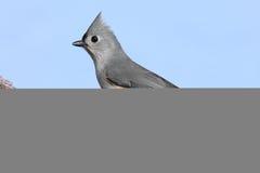 Bird On A Stump Royalty Free Stock Photo