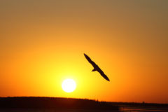 Bird and the sun stock photography