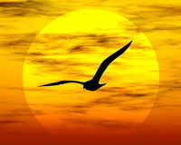 Bird and sun. Sunset. Sunset and bird vector illustration