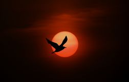 Bird and sun silhouette. Birld silhouette against sun and clouds stock photo