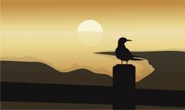 Bird at sunrise scenery Stock Photography