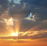 Bird on sunset. Flying bird on sunset background, motion blur Royalty Free Stock Images
