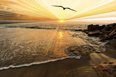 Free Bird Sunset Stock Photos - 76433793