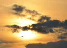 Bird of a sunset with clouds. Stock Image
