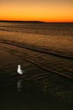 Bird and Sunset - Fraser Island, UNESCO, Australia Royalty Free Stock Photos