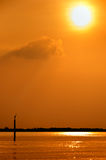 Bird in sunset. A lone sea bird takes advantage of the last rays of sunlight Stock Image