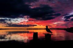 Bird of Sunset Royalty Free Stock Image
