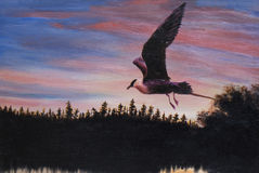 Bird on sunset, painting Stock Images
