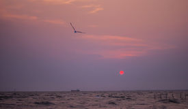 Bird and Sunset. Seagull flying in the sky with sunset  at Bangpu, Thailand Stock Photography