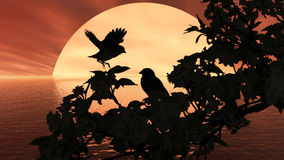 Bird Sunshine red Stock Photography