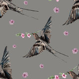 Bird swallow, blossoming peach, watercolor Stock Photography