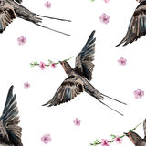 Bird swallow, blossoming peach, watercolor Royalty Free Stock Photo