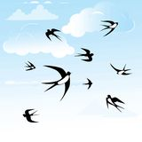 Bird swallow set. Royalty Free Stock Photo