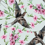 Bird swallow, peach flowers watercolor, pattern seamless Stock Images