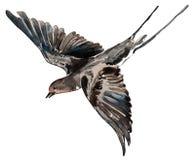 Bird swallow watercolor, pattern. Bird swallow   white background watercolor handmade pattern Royalty Free Stock Photo