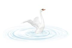 Bird swan Royalty Free Stock Images