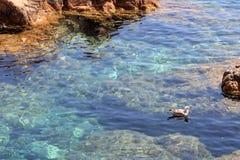 Bird swimming in the sea. In Gerona Royalty Free Stock Photo