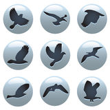 Bird symbols Stock Photos