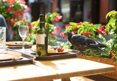 Bird on a table, eating leftovers from plates Stock Photography