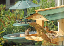 Bird Table And Guests Stock Image