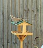 Bird Table royalty free stock photography