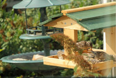 Bird Table Stock Photography