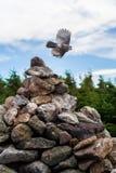 Bird Takes Flight off Rock Cairn Stock Images