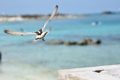 Bird taking flight Stock Image
