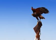 Bird taming Royalty Free Stock Photo