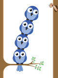 Bird Teamwork Stock Images