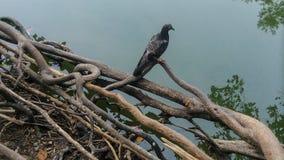 Bird. Of thailand Royalty Free Stock Photography