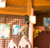 Bird, Thailand Royalty Free Stock Images