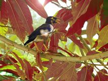 Bird, thailand, exotic, tourism, wallpaper, nature, animals, summer, sun,phuket, tropics. Beautiful exotic bird on Phuket Peninsula, Thailand stock photo