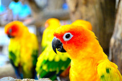 Bird. In thailand zoo yellow Royalty Free Stock Images
