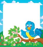 Bird theme frame  Royalty Free Stock Photography