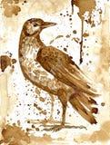 Bird thrush drawn coffee. Bird thrush was drawn with coffee drink royalty free stock photo