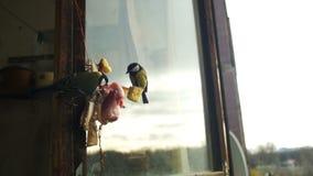 Bird Titmouse Eats Bread and Lard on a Wooden Window Sill. Slow Motion stock video