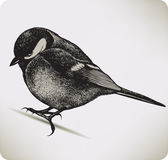 Bird titmouse, hand-drawing. Royalty Free Stock Photos